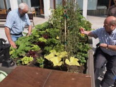Huerto ecológico en la Residencia Joxe Miel Barandiaran de Durango