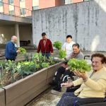Huerto de la Residencia de mayores Barandiaran de Durango
