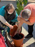 Taller de jardinería en la Residencia de mayores Txurdinagabarri