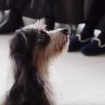 Demostración de terapia con animales en el Centro de Día de Personas Mayores Dependientes de Soraluze